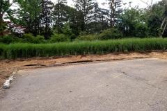 Bamboo Barrier 25